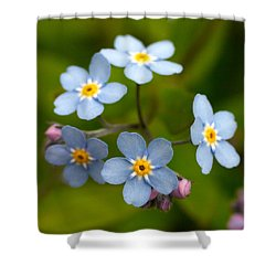 Forget-me-not Shower Curtain by Jouko Lehto