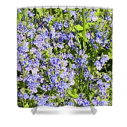 Forget-me-not - Myosotis Shower Curtain by Irina Afonskaya