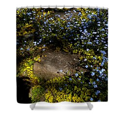 Shower Curtain featuring the painting Forget-me-nots 1 by Renate Nadi Wesley