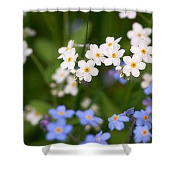 Forget Me Nots Shower Curtain by Jouko Lehto