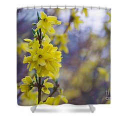 Shower Curtain featuring the photograph Forsythia by Rima Biswas