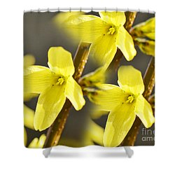 Forsythia Three Shower Curtain