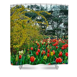 Shower Curtain featuring the photograph Forsythia Tulips And Daffadils by Diana Mary Sharpton