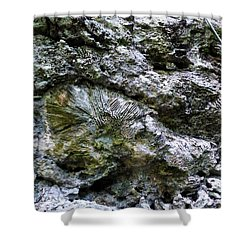 Shower Curtain featuring the photograph Fossil In The Wall by Francesca Mackenney