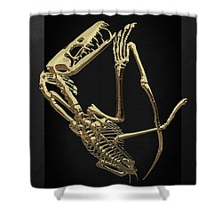 Shower Curtain featuring the digital art Fossil Record - Gold Pterodactyl Fossil On Black Canvas #3 by Serge Averbukh