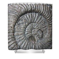 Fossil Spiral  Shower Curtain by LeeAnn McLaneGoetz McLaneGoetzStudioLLCcom