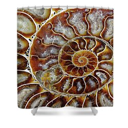 Fossilized Ammonite Spiral Shower Curtain