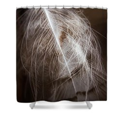 Found Feather Shower Curtain