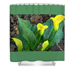 Shower Curtain featuring the photograph Four Calla Lilys by Jerry Sodorff