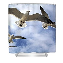 Four Gulls Shower Curtain