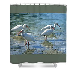 Four Ibises Shower Curtain by Carol Groenen
