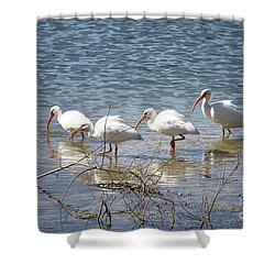 Four Ibises Walking In Water Shower Curtain by Carol Groenen