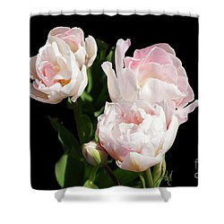 Four Pink Tulips And A Bud On Black Shower Curtain