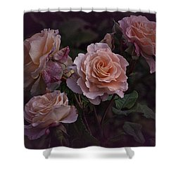 Four Vintage Roses Shower Curtain by Richard Cummings