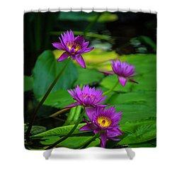 Four Waterlilies Shower Curtain