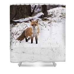 Fox 4 Shower Curtain