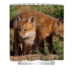Fox Cubs Playing Shower Curtain by William Jobes