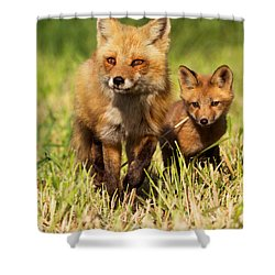 Fox Family Shower Curtain