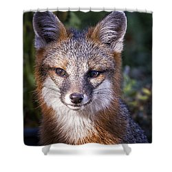 Fox Gaze Shower Curtain