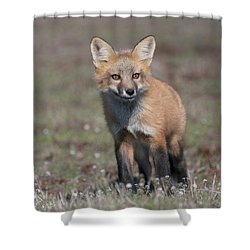 Fox Kit Shower Curtain by Elvira Butler