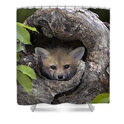 Fox Kit In Log Shower Curtain
