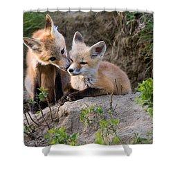 Fox Kits Canada Shower Curtain by Mark Duffy