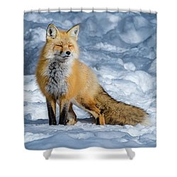 Fox On A Winter Afternoon Shower Curtain