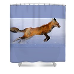 Fox On The Run Shower Curtain