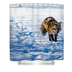 Fox Path Shower Curtain