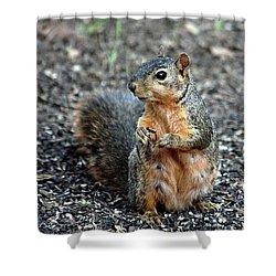 Fox Squirrel Breakfast Shower Curtain by Sheila Brown