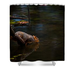 Fox Squirrel Drinking Shower Curtain
