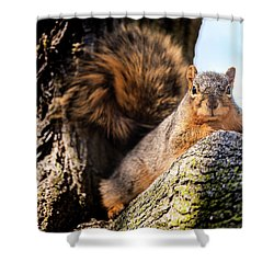 Shower Curtain featuring the photograph Fox Squirrel Watching Me by Onyonet  Photo Studios
