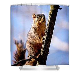Fox Squirrel's Last Look Shower Curtain by Onyonet  Photo Studios