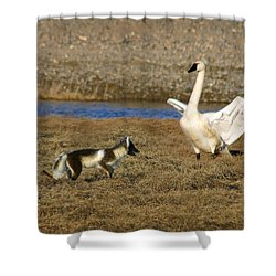 Fox Vs Swan Shower Curtain by Anthony Jones