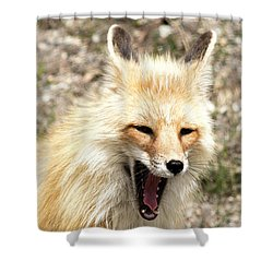 Fox Yawn Shower Curtain