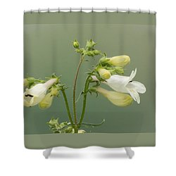 Foxglove Beardtongue Shower Curtain
