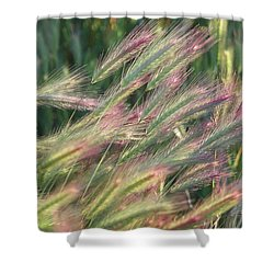 Foxtails In Spring Shower Curtain
