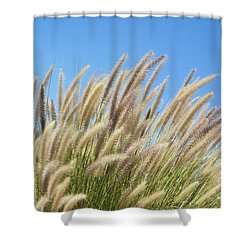 Foxtails On A Hill Shower Curtain