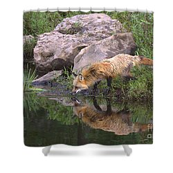 Shower Curtain featuring the photograph Foxy Reflection by Myrna Bradshaw