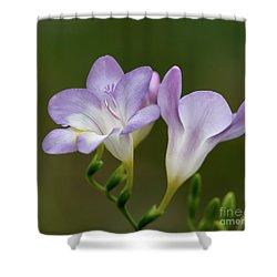 Fragrant Freesias 2 Shower Curtain