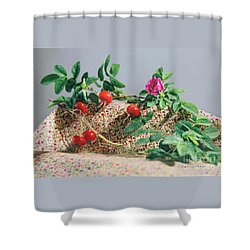Shower Curtain featuring the photograph Fragrant Rugosa Rose With Rosehips And Leaves by Nancy Lee Moran