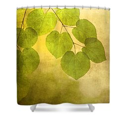 Framed In Light Shower Curtain