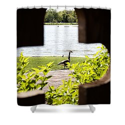 Framed Nature Shower Curtain