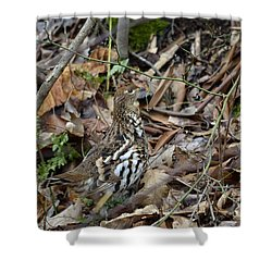 Framed Rugr Shower Curtain by Randy Bodkins