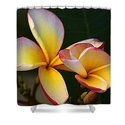 Frangipani Flowers Shower Curtain