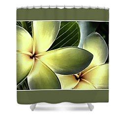 Frangipani - Plumeria Shower Curtain