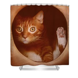 Frankie In A Box Shower Curtain