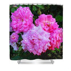Frank's Roses Shower Curtain by MaryLee Parker