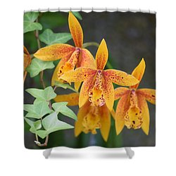 Freckled Flora Shower Curtain by Deborah  Crew-Johnson