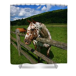 Freckles Shower Curtain by Karol Livote